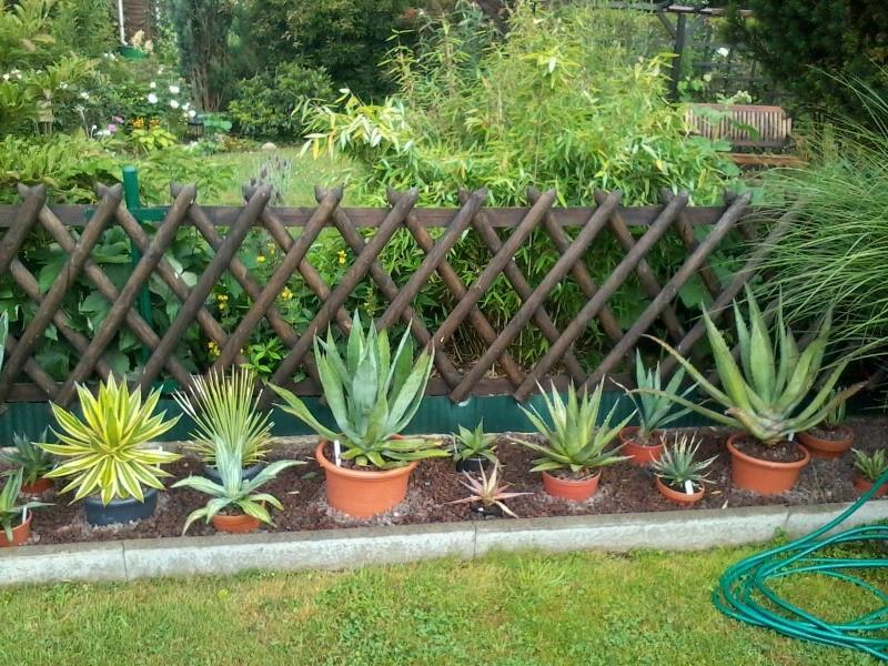 ein Blick in meinen Garten (agavenroland) Foto1326