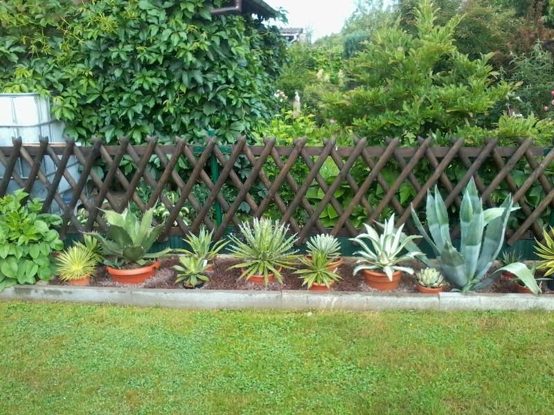 ein Blick in meinen Garten (agavenroland) Foto1329