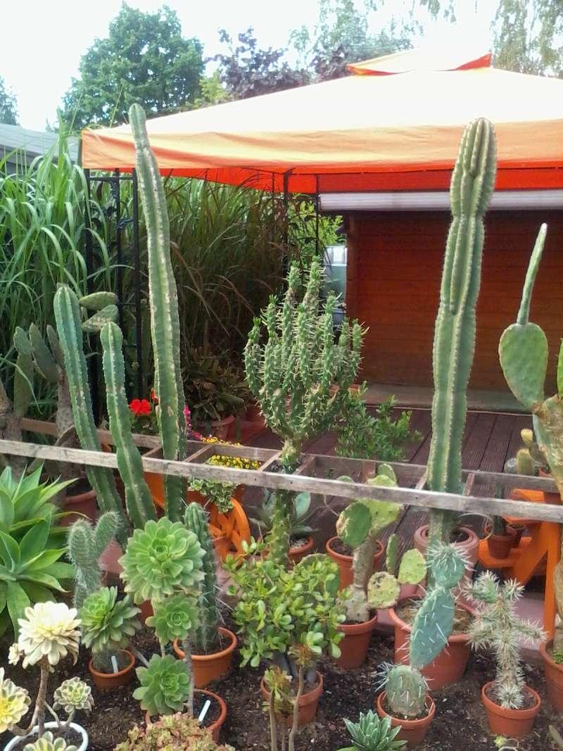 ein Blick in meinen Garten (agavenroland) Foto1330