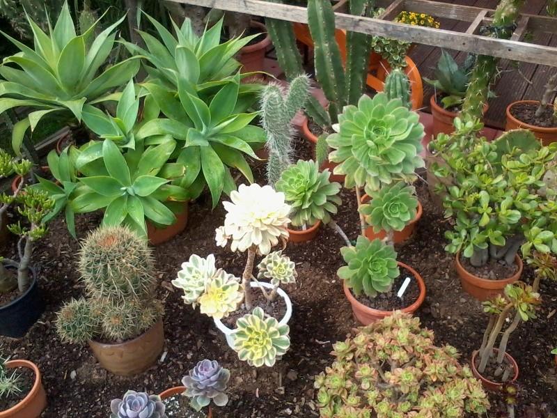ein Blick in meinen Garten (agavenroland) Foto1331