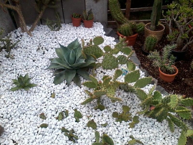 ein Blick in meinen Garten (agavenroland) Foto1332