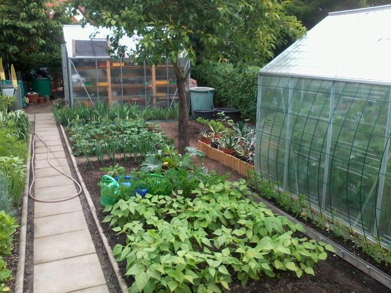 ein Blick in meinen Garten (agavenroland) Foto1334
