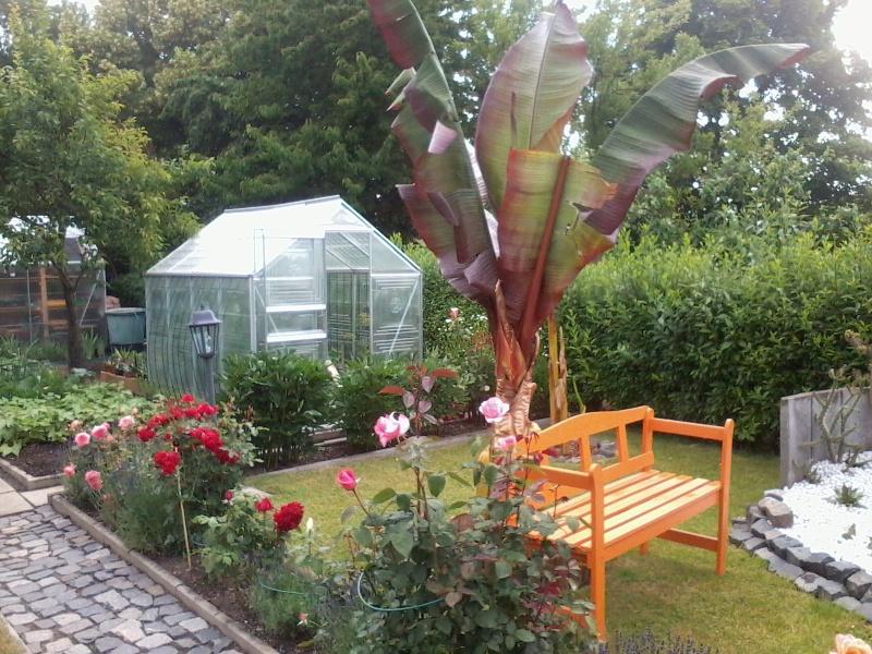 ein Blick in meinen Garten (agavenroland) Foto1337
