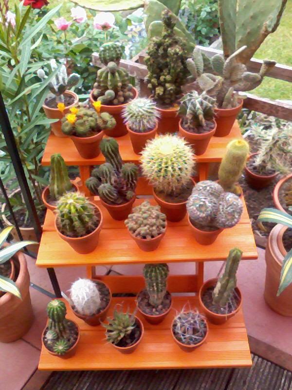 ein Blick in meinen Garten (agavenroland) Foto1340