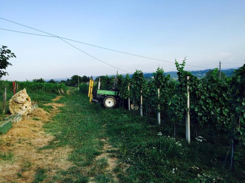 Radovi & poslovi u vinogradu - Page 5 11059810
