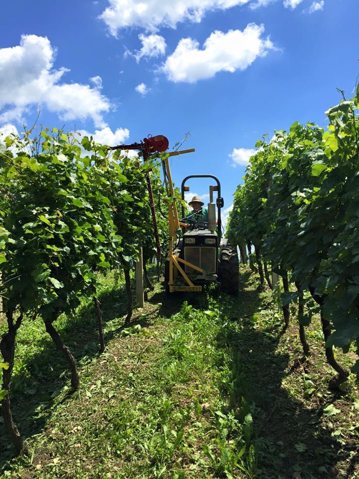 Radovi & poslovi u vinogradu - Page 5 11181210