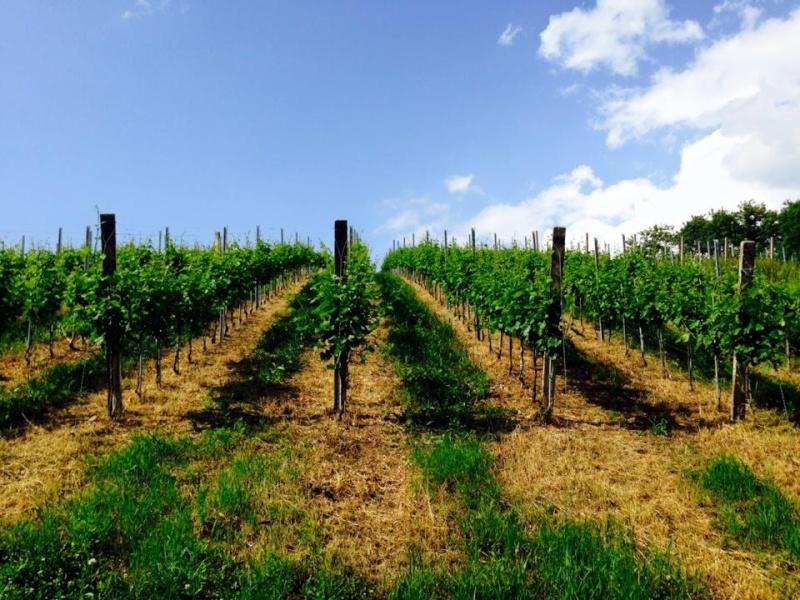 Radovi & poslovi u vinogradu - Page 5 11259610