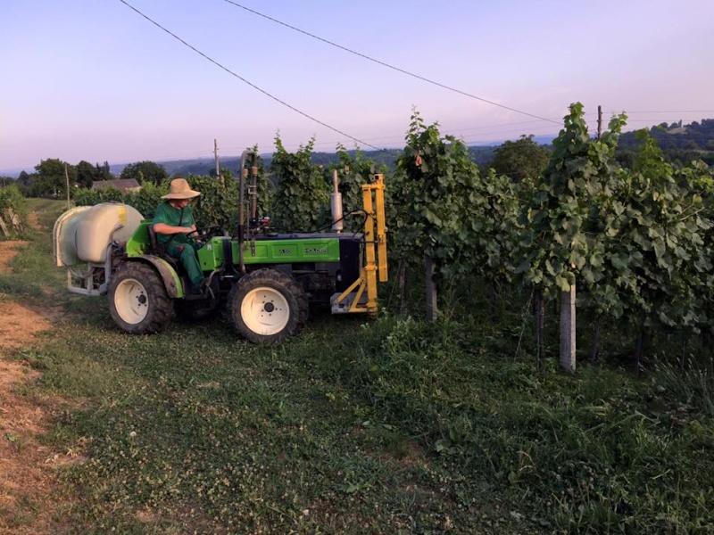 Radovi & poslovi u vinogradu - Page 5 11694910