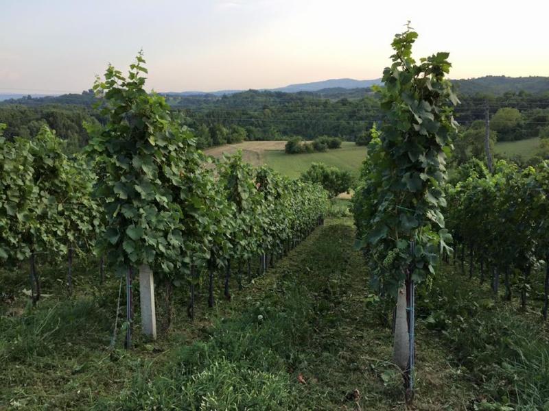 Radovi & poslovi u vinogradu - Page 5 11745710