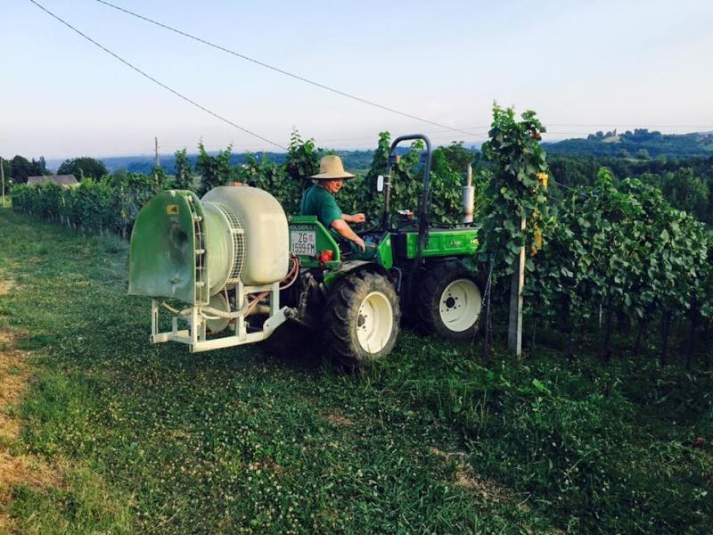 Radovi & poslovi u vinogradu - Page 5 11750610