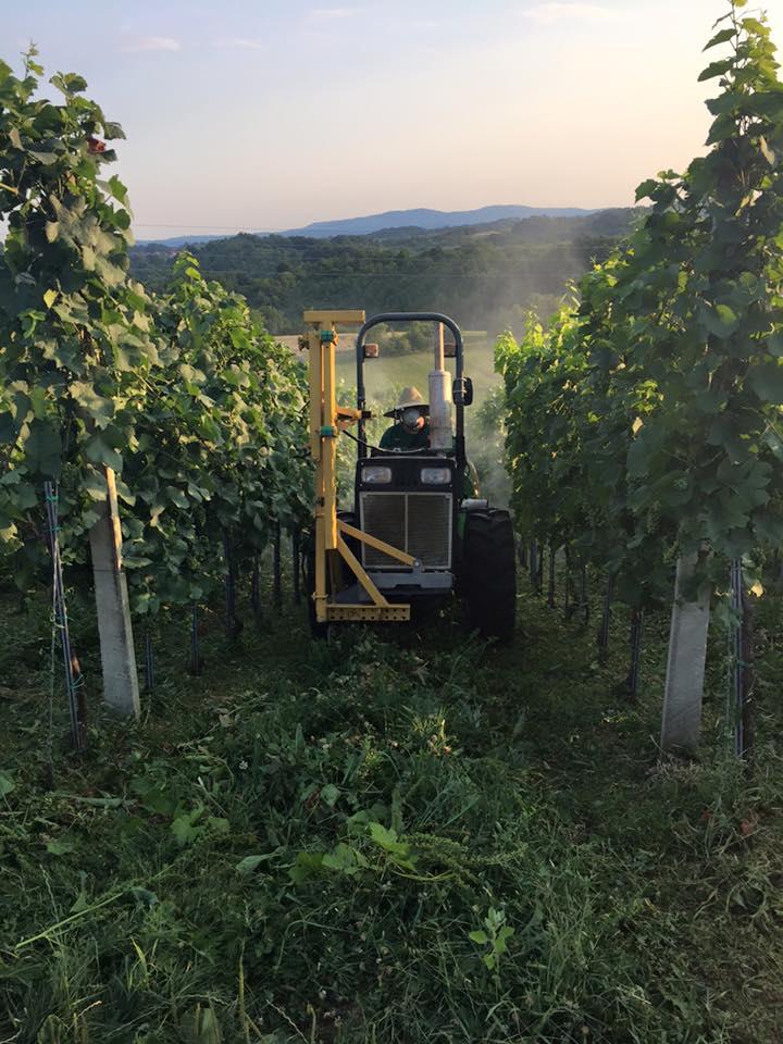 Radovi & poslovi u vinogradu - Page 5 11750611
