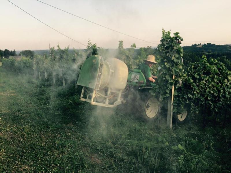 Radovi & poslovi u vinogradu - Page 5 11755110