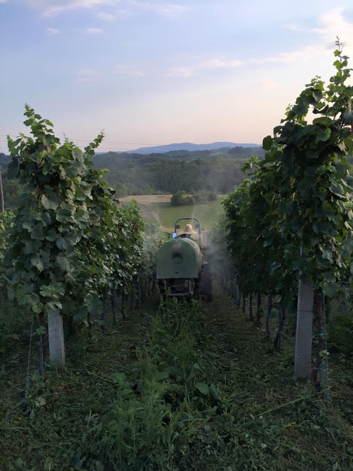 Radovi & poslovi u vinogradu - Page 5 13754_10