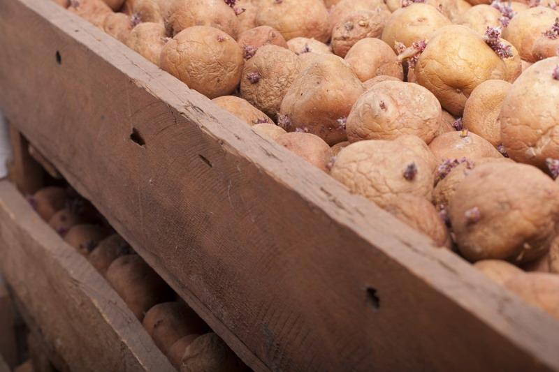 Krumpir       - Page 2 Isprav10