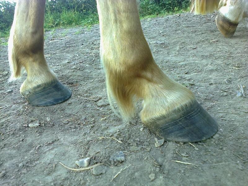 Avis sur mes pieds-nus Photo012