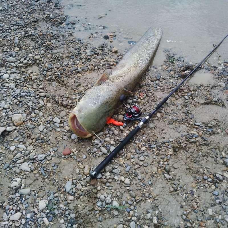 Canne pour pêche du silure aux leurres Img_2014
