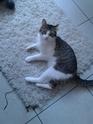 Janet,chaton femelle maltraitée,4 mois 1/2, - Page 3 Img_2012