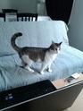 Janet,chaton femelle maltraitée,4 mois 1/2, - Page 3 Img_2013
