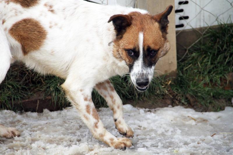 DIOGENE - 15 kg petit croisé male, né mars 2013 (REAA) - RESERVE ANIMALS RESCUE - Page 3 11890410