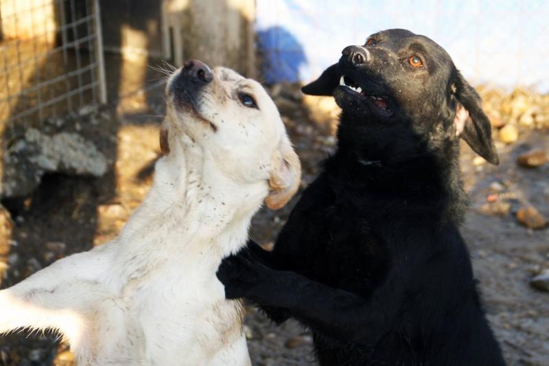 GIACOMO, M-Type labrador, né 2013 (REAA) - Pris en charge Association ANIMALS RESCUE (Belgique) - Page 5 11893712