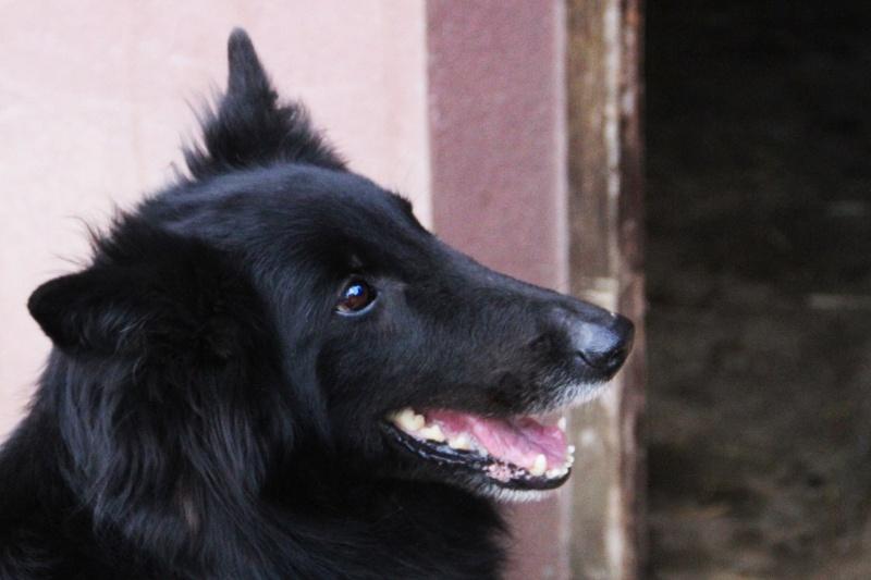 MAZA, F-BB Groenendael, née 2009 - voudrait connaitre la vie de famille-REA/PARRAINEE asso Mukitza 11894610