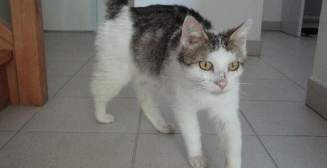 Urgence : FA ou adoptants pour Diane jeune chatte (13) Diane_11