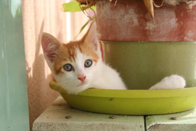 DONUTS chaton blanc et roux (13) Img_2111