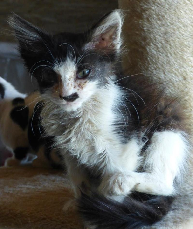LUCICA (ex-ERIKA), femelle, juin 2015, chez LUCIAN - adoptée par Clémentine (dpt30) 11898610