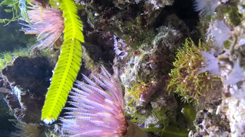 Mon Pico récif 20L Wp_20127