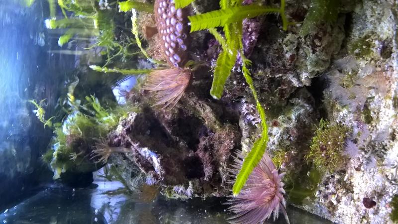Mon Pico récif 20L Wp_20128