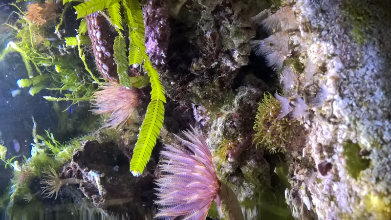 Mon Pico récif 20L Wp_20129