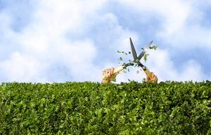 Bon Jeudi Hedge-10