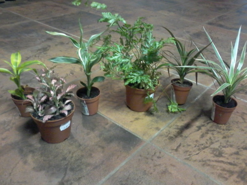 [help]terrarium sur mesure- Japalura splendida - Page 3 20150710