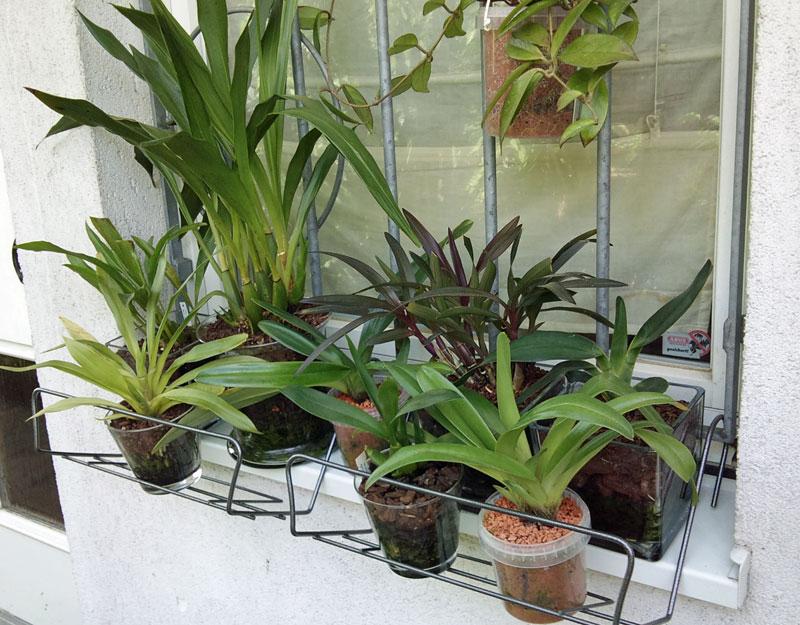 Orchideen in Glasvase 3 - Seite 3 Glas10