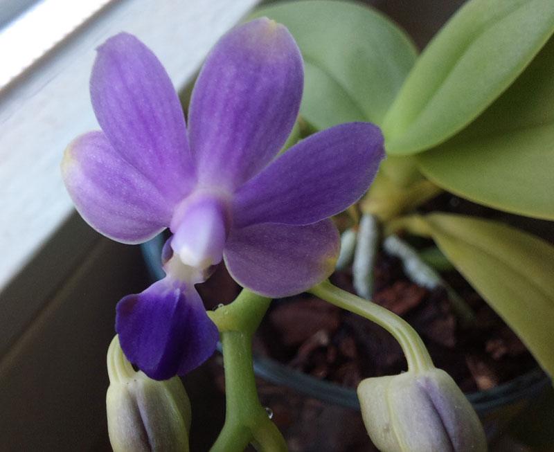 Orchideen in Glasvase 3 - Seite 6 Juli110