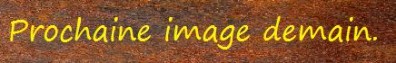 La capture d'image - Jeu à durée indéterminée - Page 5 Procha10