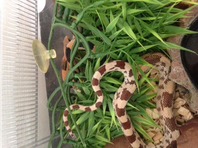 Mes serpents Image210
