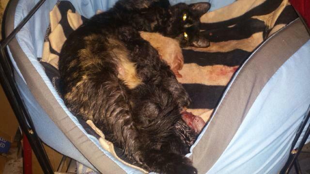 Portée de 9 chatons Image610