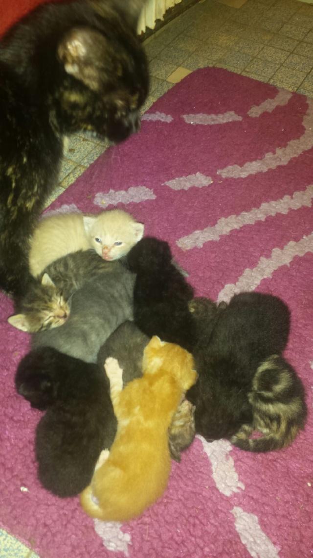 Portée de 9 chatons Img_7418
