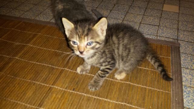 Portée de 9 chatons Img_7628