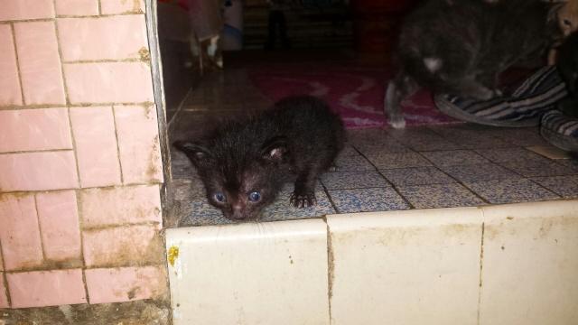 Portée de 9 chatons Img_7629