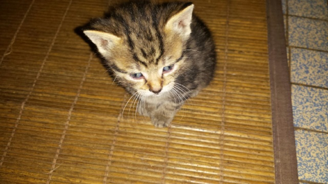 Portée de 9 chatons Img_7631