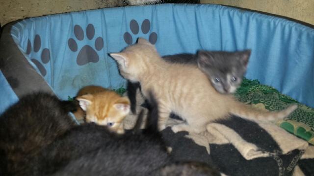 Portée de 9 chatons Img_7632