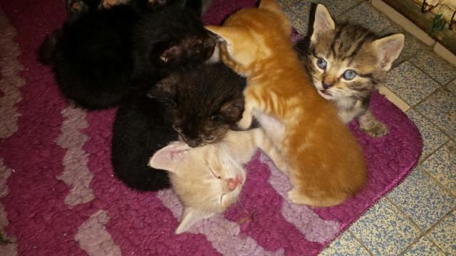 Portée de 9 chatons Img_7633