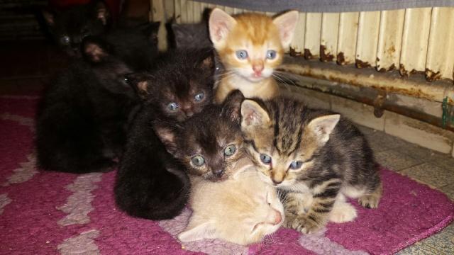 Portée de 9 chatons Img_7634