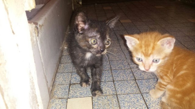 Portée de 9 chatons Img_7720