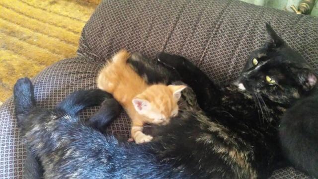 Portée de 9 chatons Img_7722