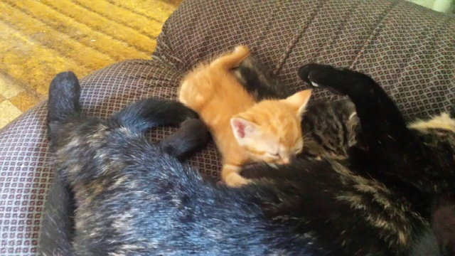 Portée de 9 chatons Img_7723