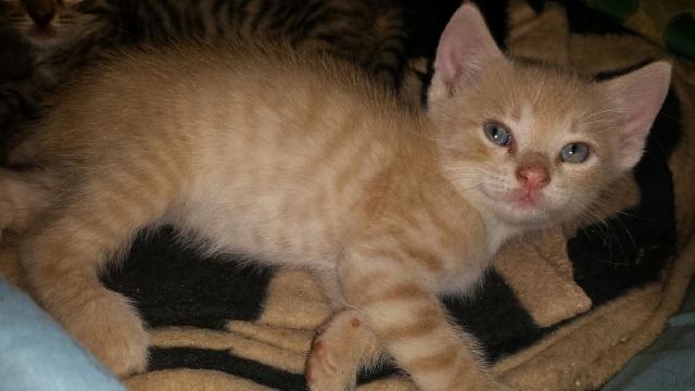 Portée de 9 chatons Img_7729