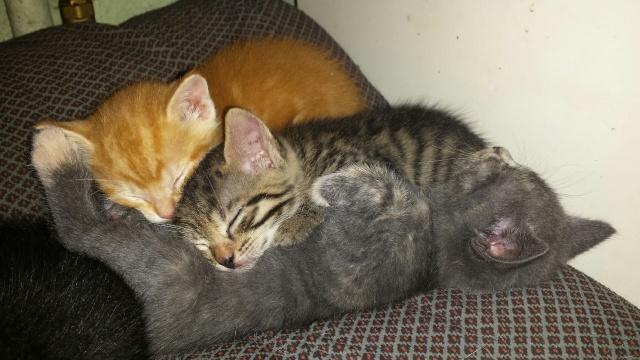 Portée de 9 chatons Img_7731